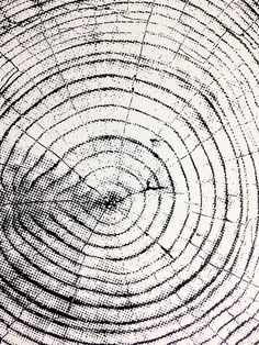 Tree Stump Tree Ring