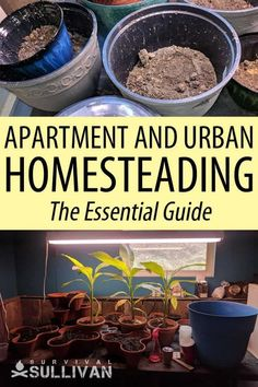 Homesteading can be done in an urban setting, including in an apartment. Here's how. #homesteading #survival #urbansurvival Survival Mode, Urban Survival, Homestead Survival, Wilderness Survival, Survival Skills, Zombies Survival, City Farm, Emergency Preparation, Urban Homesteading