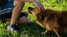 #Vivre avec un chien réduirait les risques d'asthme et d'eczéma chez les enfants - 20minutes.fr: 20minutes.fr Vivre avec un chien réduirait…