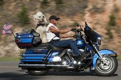 """REAL MEN LOVE POODLES Biker says to his poodle, """"Hell yes, we're goin' to the Poodle Peace Parade!"""""""