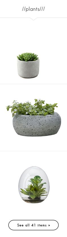 """""""//plants///"""" by spacecafe ❤ liked on Polyvore featuring home, outdoors, outdoor decor, fillers, plants, fillers - plants, other, concrete pots, cement pots and concrete garden decor"""