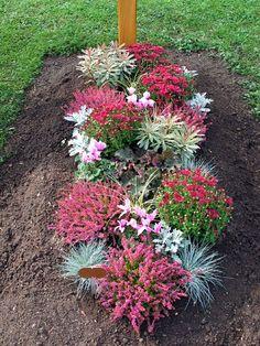 Bepflanzung Herbst Mehr - All For Garden Blooming Flowers, Summer Flowers, Flower Seeds, Flower Pots, Fenced Vegetable Garden, Flower Garden Design, Large Plants, Funeral Flowers, Geraniums