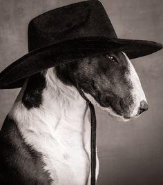 Bull Terrier by Paul Croes
