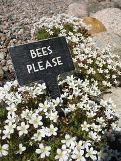 Bees please - tips for a pollinator friendly garden, I love bees Garden Quotes, Garden Signs, Garden Fences, Bee Happy, Save The Bees, Plantar, Bees Knees, Freundlich, Queen Bees