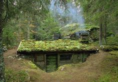 An earth-sheltered home with a moss-covered roof situated in a pine forest