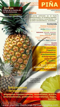 Propiedades medicinales, beneficios y usos de la piña  -  Medicinal properties, benefits and uses of pineapple
