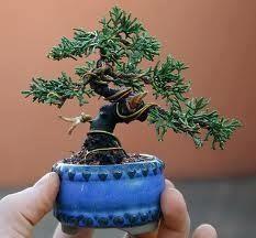 Bonsai Art, Bonsai Plants, Bonsai Garden, Garden Trees, Garden Plants, Bonsai Trees, Mini Bonsai, Plantas Bonsai, Minis