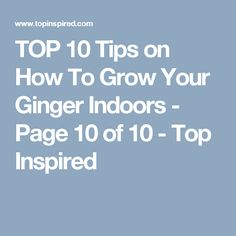 TOP 10 Tips on How To Grow Your Ginger Indoors - Page 10 of 10 - Top Inspired