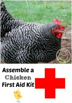 Assemble a chicken first aid kit now so you will be prepared for any emergency! Assemble a chicken first aid kit now so you will be prepared for any emergency! Chicken Coop Kit, Portable Chicken Coop, Best Chicken Coop, Building A Chicken Coop, Chicken Pen, Backyard Poultry, Chickens Backyard, Backyard Farming, Backyard Ideas