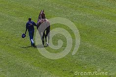 Photo about Photo looking down on race horse thats been ejected from sprint race. Image of green, sports, handler - 27883561 Sprint Race, Photo Look, Horse Racing, Editorial, Track, Horses, Sports, Image, Hs Sports