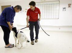 Salvando vidas: cães resgatados são treinados para detectar câncer em humanos