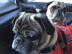 Opie and Hugo Update: Happily adopted and going for a ride!!! :)