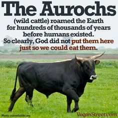 The Aurochs roamed the Earth...