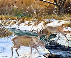 Wildlife Paintings, Wildlife Art, Deer Art, Moose Art, Deer Hunting, Carving, How To Get, Outdoors, Let It Be