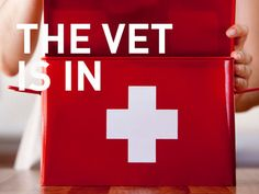 Canine first aid tips that all dog owners should know