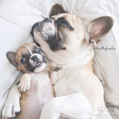 """From @dimithefrenchie: """"That moment you wake up and realize it is not friday yet!"""" #cutepetclub"""