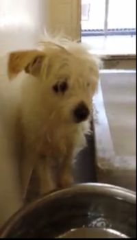 Family's 'outside dog' Maltese surrendered to animal control when they moved