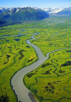 Copper River Delta, Chugach National Forest, Cordova, Alaska. It was the summer of 1995!