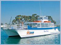 Dana Wharf's catamaran cuts through the seas in search of whales and dolphins in Dana Point!