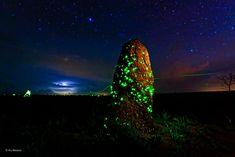 Parque das Emas e o raríssimo Fenômenos da Bioluminescência