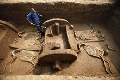 Ancient horses and Chariot unearthed.   Photograph by Zhang Xiaoli, Xinhua   To protect it from drying out, a worker sprays water onto a millennia-old chariot recently unearthed in the city of Luoyang  in central China.  Overall, 5 chariots and 12 horse skeletons were found in the tomb pit, according to China's state-sponsored Xinhua news service. Archaeologists believe the tomb was dug as part of the funeral rites of a minister or other nobleman during the Eastern Zhou dynasty period.