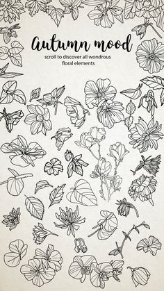 50 hand drawn floral elements example image 5