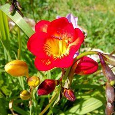 by http://ift.tt/1OJSkeg - Sardegna turismo by italylandscape.com #traveloffers #holiday | Flower. #flower #nature #love #beautiful #flowers #spring #plants #summer #garden #flowerstagram #instalike #fashion #girl #instalove #petals #sardegna #instasardegna #sardinia #igerscagliari #ig_sardinia #sardegnaofficial #loves_united_sardegna #volgosardegna #igersardegna #vivosardegna #loves_sardegna #lanuovasardegna #sardiniamylove #sea #ig_cagliari Foto presente anche su http://ift.tt/1tOf9XD…