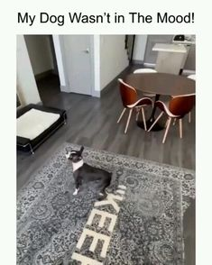 Funny dog videos can t stop laughing try not to laugh challenge funny pets video funnydogs funny humor trynottolaugh Funny Dog Memes, Funny Dog Videos, Funny Video Memes, Funny Animal Memes, Funny Pets, Funny Animal Pictures, Cute Funny Animals, Cute Baby Animals, Animal Humor