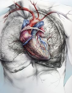 Ilustración Médica de Giselle Vitali