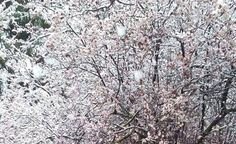 Imágenes enviadas por los lectores de las nevadas caídas en Navarra este lunes 14 de marzo de 2016.