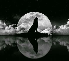 idea for tattoo - moon in background, Wolf on top, dog as reflection. entre chien et loup. Wolf Photos, Wolf Pictures, Wolf Tattoos, Celtic Tattoos, Animal Tattoos, Wolf Artwork, Wolf Spirit Animal, Howl At The Moon, Wolf Wallpaper