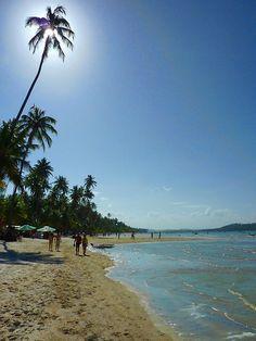 Sunny Palm at Praia dos Carneiros, Pernambuco, Brasil via Flickr.
