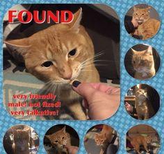 Found Cat - Unknown - Brampton, ON, Canada on November 23, 2015 (23:15 PM)