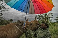 A Rhino and its keeper at the Lewa Wildlife Conservancy in Kenya. National Geographic Photographers, National Geographic Travel, National Geographic Society, Baby Rhino, Earth Photos, Thing 1, Photography Competitions, World Photography, Photography Awards