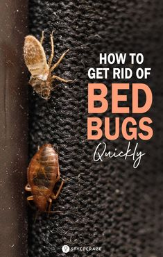 How To Get Rid Of Bed Bugs Quickly: You are sleeping peacefully in your comfortable bed. Suddenly, y Bed Bug Remedies, Home Remedies, Natural Remedies, Homemade Beds, Homemade Bug Spray, Signs Of Bed Bugs, Bed Bug Trap, Sand Fleas, Bug Spray Recipe