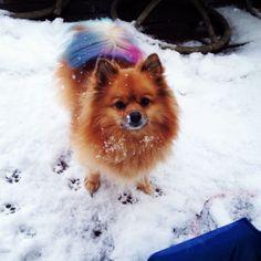 Roxie!!