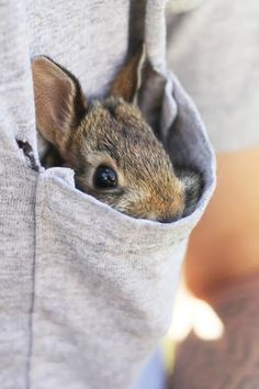 Is that a bunny in your pocket?//