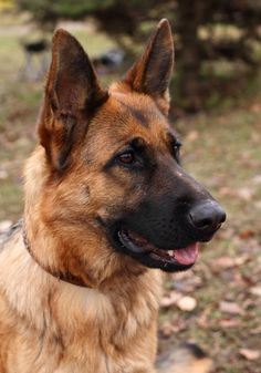 5 Reasons To Adopt A Retired Military Working Dog