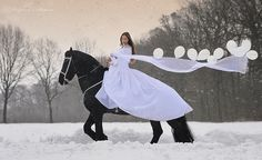 friesian horses. Such a beautiful breed. The bigger they are, the more gentle...