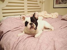 Bedtime ✨ French Bulldog ❤️