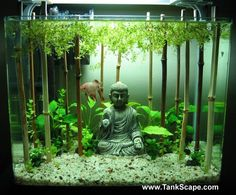 I was thinking of an aquarium setup similar to this... But lucky bamboo in place of the brown stalks. Cool betta tank.