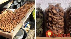 Pokud se vám v zahradě sklizené ořechy, nikdy nevyhazujte skořápky a tvrdé vnitřek: Pečlivě jejich uchovejte, je na to velmi dobrý důvod!