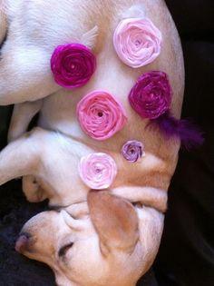 Dog modeling fabric rosette favors