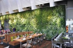 A living green wall helps connect us to nature, boosts moods, productivity & minimizes absenteeism in schools, & offices. It can also be added to any home!