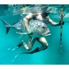 Spear fishing, Giant trevally