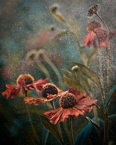 Beautiful Macro Photographs By Magdalena Wasiczek
