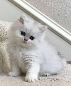 Funny Animal Videos, Cute Funny Animals, Cute Baby Animals, Animals And Pets, Pretty Cats, Beautiful Cats, Cute Cats And Kittens, Kittens Cutest, Cat Aesthetic