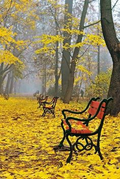 Red benches, Yellow leaves in the park: Poland/Jaroslaw Grudzinski Beautiful World, Beautiful Places, Beautiful Pictures, Fall Pictures, Mellow Yellow, Bright Yellow, Belle Photo, Mother Nature, Scenery