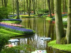 Keukenhoff, Netherlands have visited twice...acres and acres of tulips