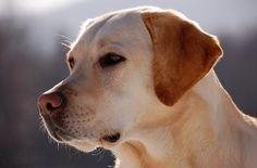 Urlaub mit Hund im Allgäu. Wenn Sie mit dem Hund in den Urlaub fahren möchten, sollten die Rahmenbedingungen stimmen. Gastgeber im Allgäu für einen Urlaub mit Hund. http://alpsee-camping.de